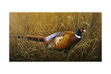 Sneaking Through the Long Grass - Ring Neck Pheasant Impression giclée par Wilhelm Goebel