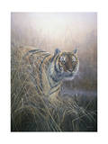 Tiger at Dawn Giclee Print by Jeremy Paul