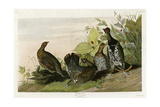 Spotted Grouse Giclee Print
