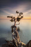 Water Tree III Photographic Print by Moises Levy