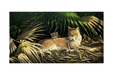 Sunny Spot Bobcat with Kittens Giclee Print by Wilhelm Goebel