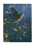 Woodcock on the Wing Giclee Print by Wilhelm Goebel
