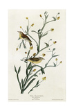 Yellow Red Poll Warbler Giclee Print