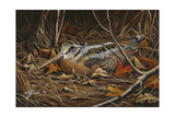 Woodcock in Hiding Giclee Print by Wilhelm Goebel