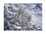 Snow Leopard Giclee Print by Jeff Tift