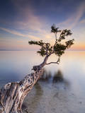 Water Tree X Photographic Print by Moises Levy