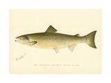 The Atlantic Salmon Gicléedruk