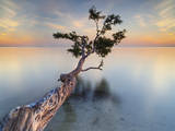 Water Tree XIV Photographic Print by Moises Levy