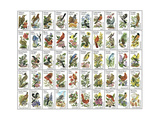 50 Birds Giclee Print