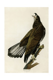 White Headed Eagle Deaux Giclee Print