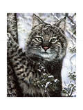 Alluring Eyes Giclee Print by Jenny Newland