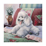 White Poodle Giclee Print by Jenny Newland