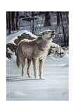 A Message for the Wind - Wolf Giclee Print by Wilhelm Goebel