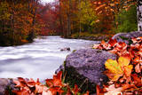 Autumn Flow Photographic Print by Dan Ballard