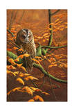 Autumn Tawny Owl Gicléedruk van Jeremy Paul