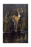 Whitetail Buck Giclee Print by Wilhelm Goebel