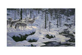 Winter's Cry Giclee Print by Jeff Tift