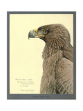 African Tawny Eagle Giclee Print
