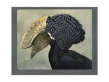 Abyssinian Crested Hornbill Reproduction procédé giclée