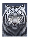 White Tiger Ghost Giclee Print by Jeremy Paul
