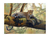 African Leopard Giclee Print by John Zaccheo
