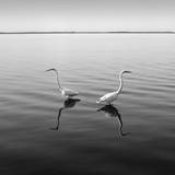 2 Herons Photographic Print by Moises Levy