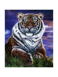 Arizona Tiger Giclee Print by Jenny Newland