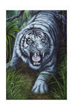 White Tiger Giclee Print by Jenny Newland