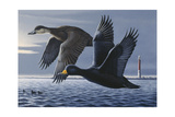 1990 Black Scoters Giclee Print by Wilhelm Goebel
