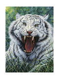 White Tiger 2 Giclee Print by Jeff Tift