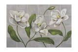 White Magnolia Giclee Print by John Zaccheo