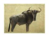 Wildebeest Giclee Print by James W. Johnson