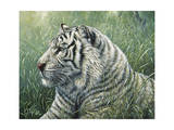 White Tiger Giclee Print by Jeff Tift