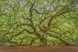 Angel Oak Papier Photo par Dennis Goodman