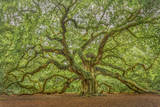 Angel Oak Photographic Print by Dennis Goodman