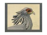 Abyssinian Secretary Bird Giclee Print