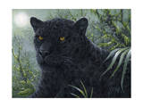 Black Beauty Giclee Print by Jeff Tift