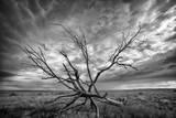 Colorado Storm Fotodruck von Dan Ballard