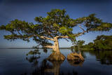 Blue Cypress Photographic Print by Dennis Goodman