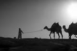 Camel Trip, Jordan Photographic Print by Dan Ballard