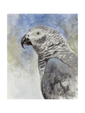 Bird - Head Study Giclee Print by Rusty Frentner