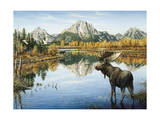 Bull Moose Giclee Print by Jeff Tift