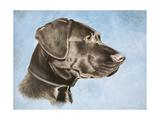 Chocolate Lab Giclee Print by Rusty Frentner