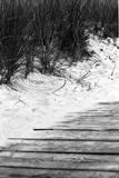 Brush Sand Wood Fotografisk tryk af Jeff Pica