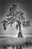 Big Cypress Photographic Print by Dennis Goodman