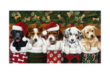 Christmas Puppies Giclee Print by William Vanderdasson