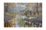 Brookside Retreat - Whitetails Giclee Print by Bruce Dumas