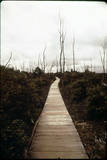 Devastation Trail Photographic Print
