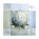 Blue Hydrangea Study 1 Giclee Print by Lisa Audit