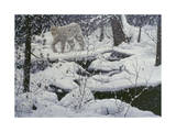 Canadian Lynx and Snowshoe Hare Giclee Print by Jeff Tift